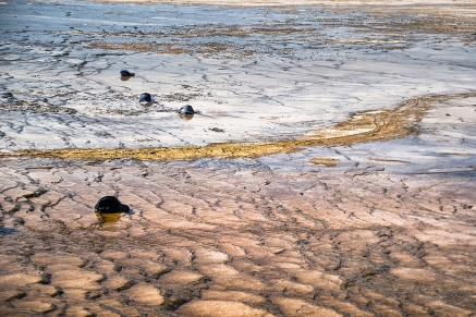 This is where hats go to die. Just down wind from the Grand Prismatic Pool boardwalk